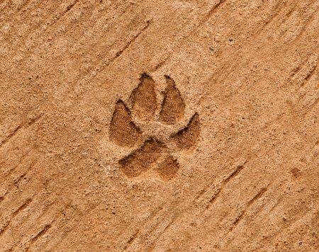 Photo pour Le chien est schématisé sur fond de plancher de ciment - image libre de droit