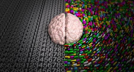 Photo pour Un cerveau typique avec le côté gauche, représentant un esprit analytique, structuré et logique et la coté droit, dépeignant un côté épars, créatif et coloré. - image libre de droit