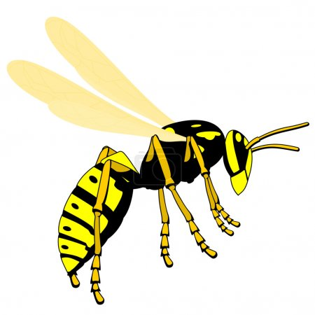 Flying adult wasp, isolated vector illustrations...