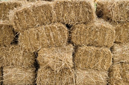 Freshly cut and baled hay stacked to dry...