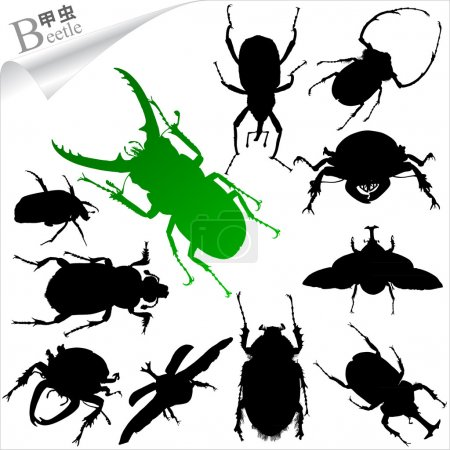 Vector Silhouettes of insect - beetles