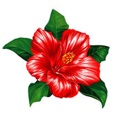 Red hibiscus blossom with leaves editable vector illustration - EPS8