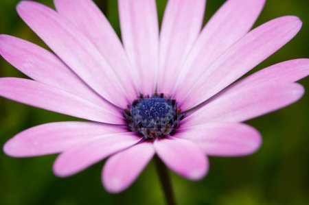 Photo of beautiful pink flower -Sallow DOF-
