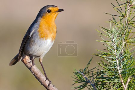 Beautiful red bird