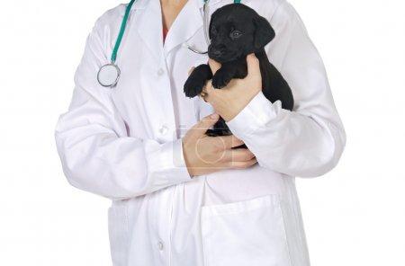 Anonimus lady veterinarian