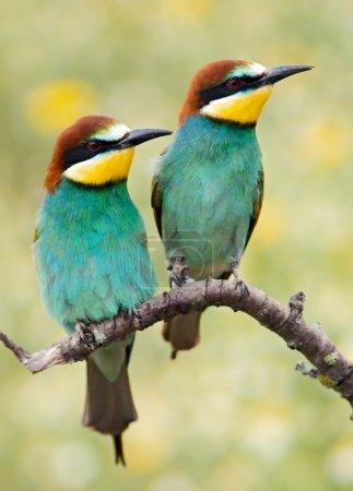 Photo pour Photo de quelques oiseaux sur fond de printemps - image libre de droit