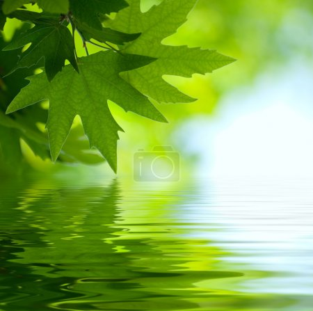 Photo for Green leaves reflecting in the water, shallow focus - Royalty Free Image