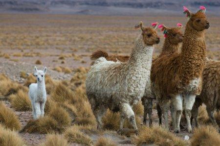 Foto de Llamas, concéntrate en el chico, DOF muy superficial - Imagen libre de derechos
