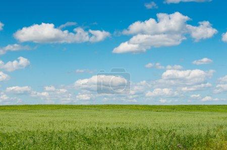 Foto de Campo verde con flores y un cielo azul - Imagen libre de derechos