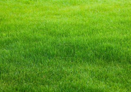 Photo pour Fond herbe verte - image libre de droit