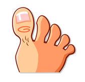 Foot and Big Toe