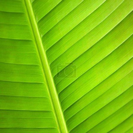 Macro Close up of green leaf.