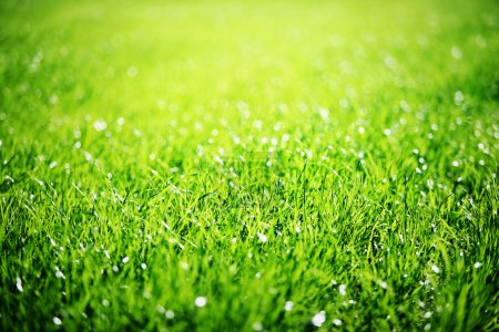 Photo for Close up of green grass with focus point. - Royalty Free Image