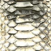 Natural python skin texture