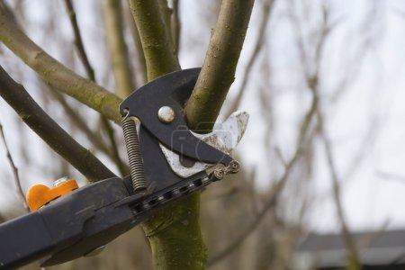 Photo pour Élagage des arbres fruitiers de sécateurs. vue détaillée des cisailles. horizontalement. - image libre de droit