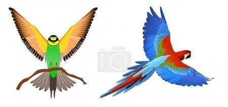 Birdss