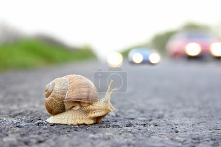 Deadly crossing a road