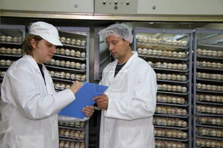 Farmers control chicken eggs