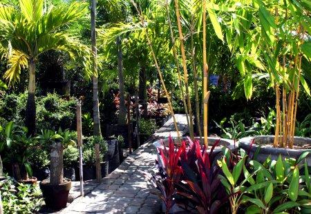 Photo pour Jardin botanique de commercialement avec des semis de la variété de plantes tropicales et d'arbres - image libre de droit