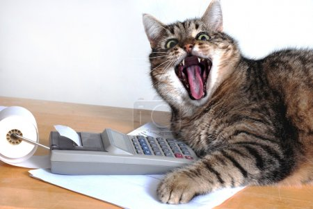 Grey tabby cat with mouth wide open, near a calcul...