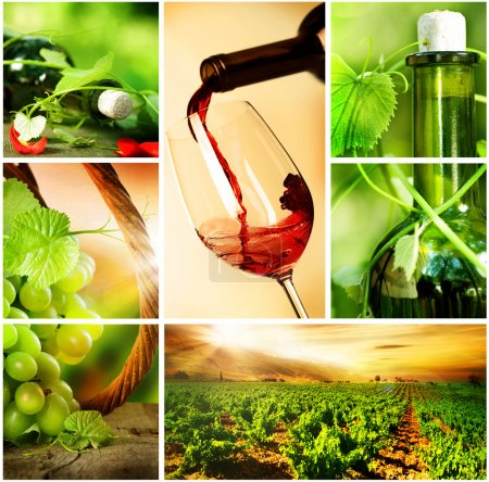 Wine. Beautiful Grapes Collage