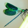 Beautiful Bright Dragonfly...