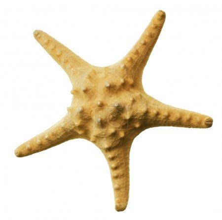 Beautiful Starfish Over White