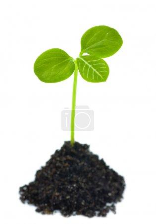 Photo pour Plante verte de plus en plus - image libre de droit