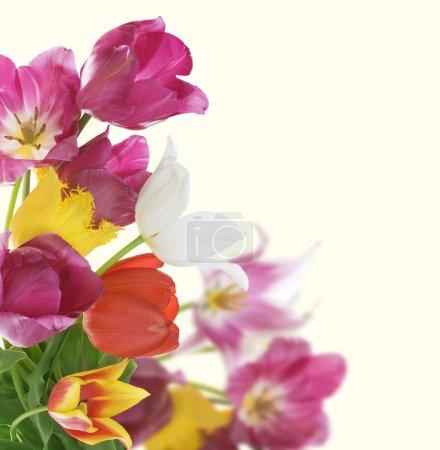 Flowers Border. Anniversary Card Design