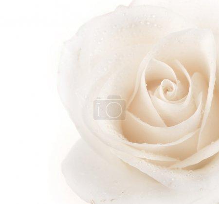 Photo pour Belle bordure rose doux - image libre de droit