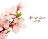 """Постер, картина, фотообои """"весенний расцвет"""""""