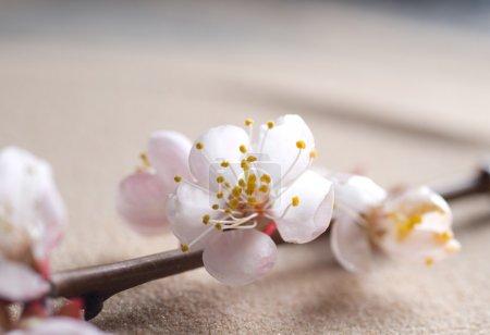 Beautiful Spring Blossom