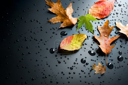 Photo for Autumn Concept - Royalty Free Image