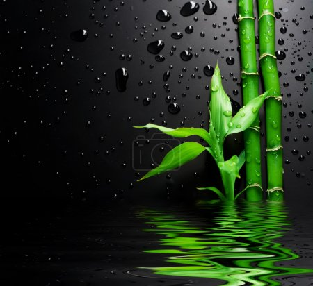 Photo for Fresh Bamboo Over Black - Royalty Free Image