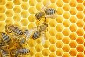 """Постер, картина, фотообои """"Рабочие пчелы на сотовый"""""""