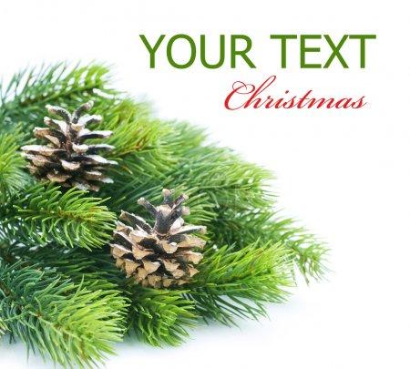 Christmas Evergreen Tree border over white