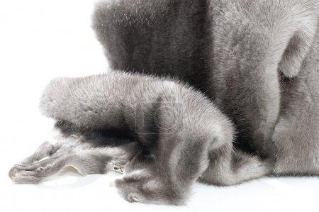 Photo pour Fourrure de vison sur blanc - image libre de droit