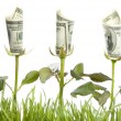 Financial Growth. Conceptual Image...