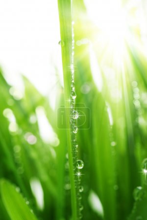 Photo for Fresh Grass - Royalty Free Image