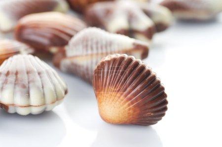 Chocolate Seashells. Selective Focus
