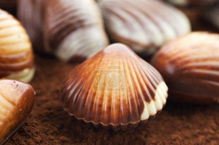 Chocolate Seashells Closeup