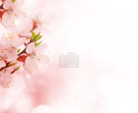 Beautiful Flowers Border...