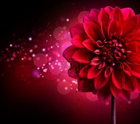Photo for Dahlia Autumn flower design.Over black - Royalty Free Image