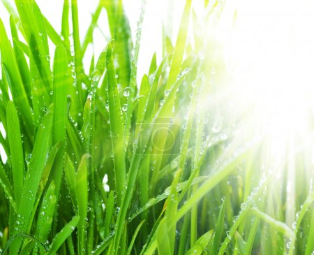 Photo for Morning Grass - Royalty Free Image