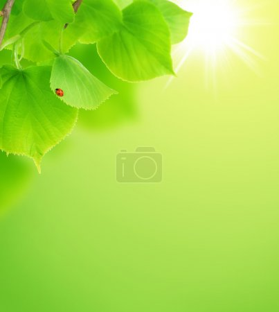 Photo for Fresh Green Leaves Background - Royalty Free Image
