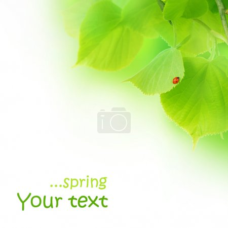Photo for Spring Concept - Royalty Free Image