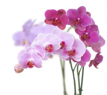 Foto de Orquídeas - Imagen libre de derechos