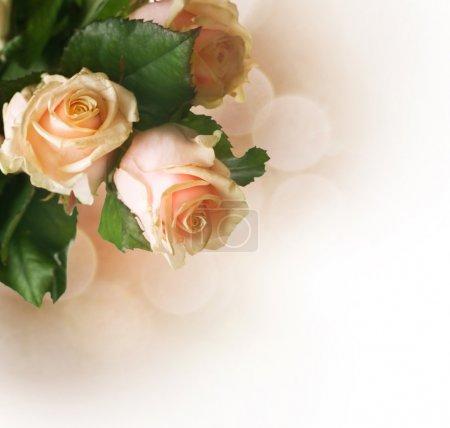 Photo pour Frontière de belles roses. Sepia tonifié - image libre de droit