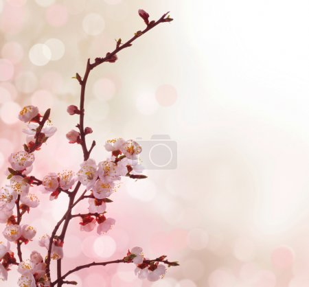 Beautiful Abstract Spring Border