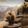 Two grizzly bears in the northern mountains of Can...